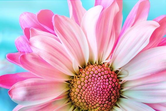 Cromoterapia en una flor